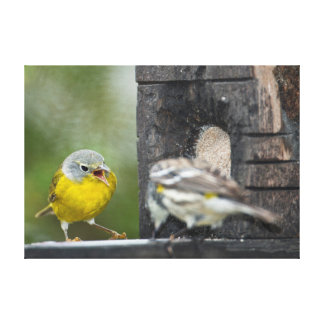 Minnesota, Mendota Heights, Nashville Warbler 2 Canvas Print