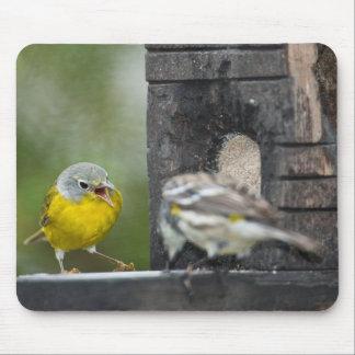 Minnesota, Mendota Heights, Nashville Warbler 2 Mouse Pad