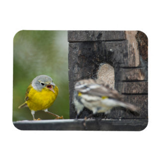 Minnesota, Mendota Heights, Nashville Warbler 2 Rectangular Photo Magnet