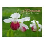 Minnesota State Flower: Showy Lady's Slipper Postcard