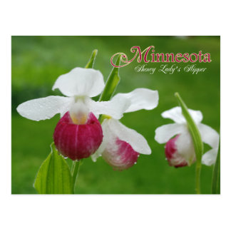 Minnesota State Flower: Showy Lady's Slipper Postcard