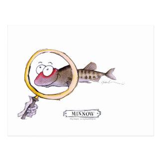 Minnow fish, tony fernandes postcard