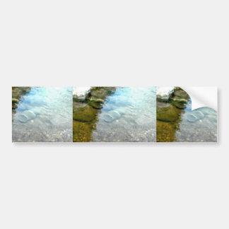 Minnow Trap Bumper Sticker