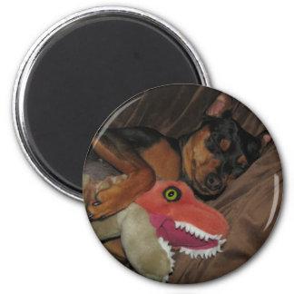 minpin trex 2 inch round magnet