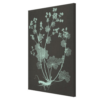 Mint & Charcoal Nature Study I Canvas Print