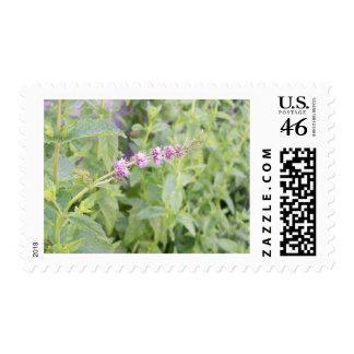 Mint Flower Postage
