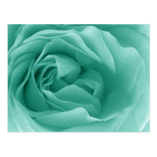 MINT GREEN Close Up of a Frilly Rose Postcard