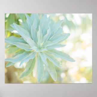 Mint Green Succulent Cactus Flower Nature Fine Art Poster