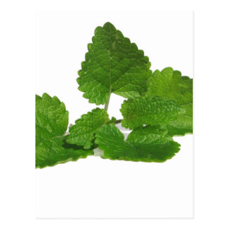 Mint Leaf Postcard