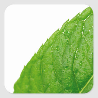 Mint Leaf Square Sticker