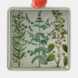 Mint: Mentha crispa Metal Ornament