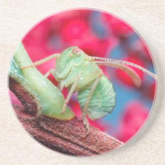 Minute Bug On Branch. Kruger National Park Coasters