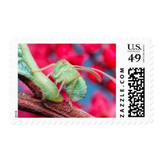 Minute Bug On Branch. Kruger National Park Postage Stamps