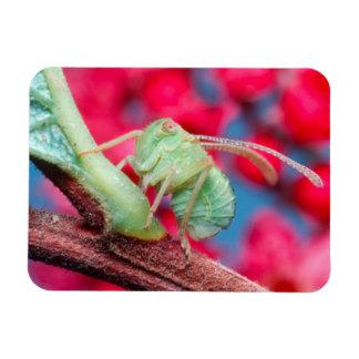 Minute Bug On Branch. Kruger National Park Rectangular Photo Magnet