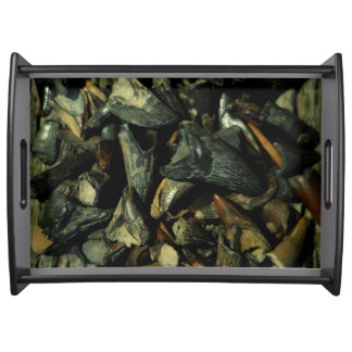 Miocene Fossil Crocodile Teeth Collection Tray Serving Platter