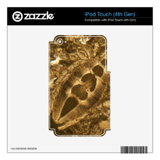 Miocene limestone under the microscope decals for iPod touch 4G