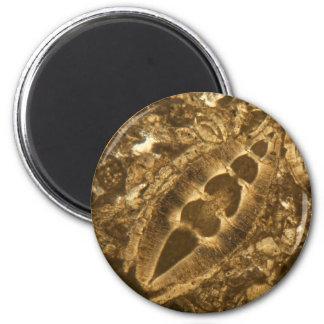 Miocene limestone under the microscope magnet