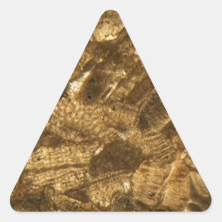 Miocene limestone under the microscope triangle sticker
