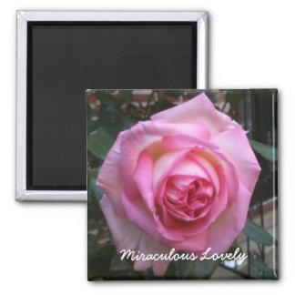 Miraculous Lovely - Rose Magnet