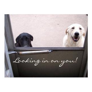 ¡Mirada adentro en usted! Postal