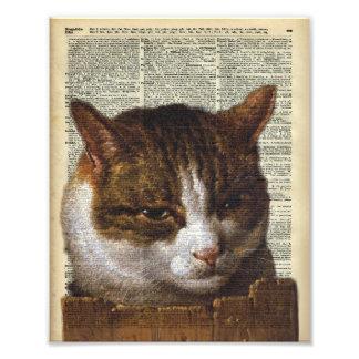 Mirada brillante del gato sobre una cerca fotografías