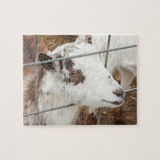 Mirada de la cabra rompecabezas con fotos