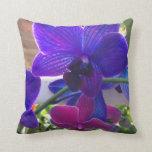 Mirada de la felpa de las flores púrpuras y carmes almohadas