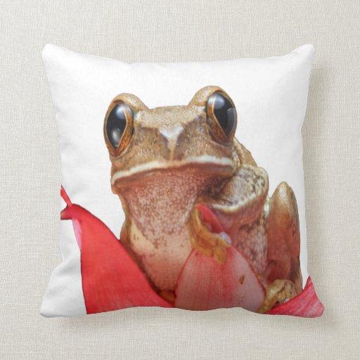 mirada de la rana adelante al amor cojines