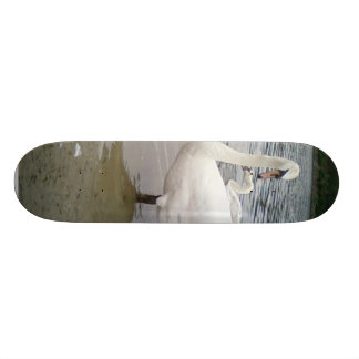 Mirada de los cisnes tabla de patinar