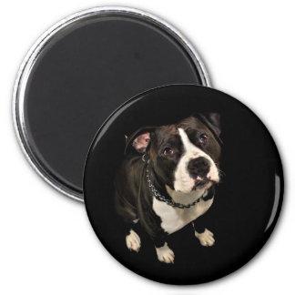 Mirada de perro basset imán redondo 5 cm