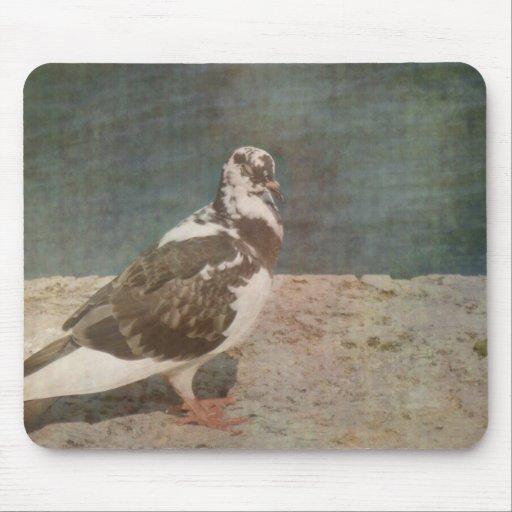 Mirada de varios colores de Grunged de la paloma e Alfombrilla De Raton