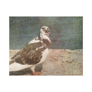 Mirada de varios colores de Grunged de la paloma e Lienzo Envuelto Para Galerías
