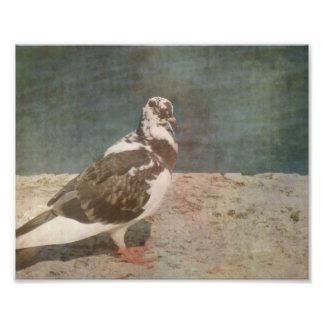 Mirada de varios colores de Grunged de la paloma e Fotografias