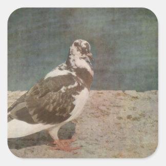 Mirada de varios colores de Grunged de la paloma Calcomanía Cuadrada