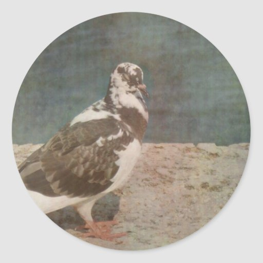 Mirada de varios colores de Grunged de la paloma Pegatina Redonda