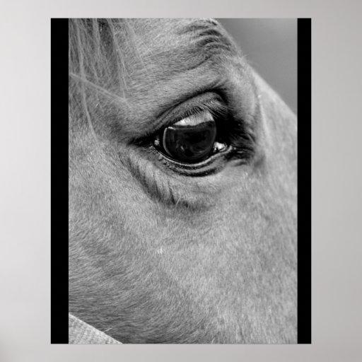 Mirada del caballo en los ojos posters