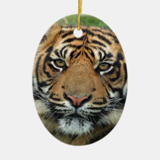 mirada del cachorro de tigre adelante a la mamá y ornamente de reyes