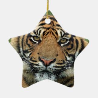 mirada del cachorro de tigre adelante a la mamá y ornaments para arbol de navidad