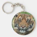 mirada del cachorro de tigre adelante a la mamá y  llaveros