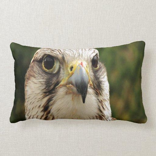 Mirada del cherrug de Falco adelante al amor Almohada