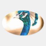 Mirada del cristatus del Pavo del pavo real Pegatina Ovalada