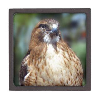 Mirada del Falcom Caja De Regalo De Calidad