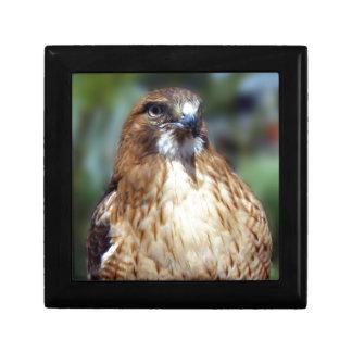 Mirada del Falcom Caja De Recuerdo