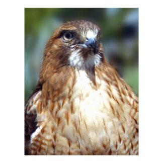 Mirada del Falcom Membrete A Diseño