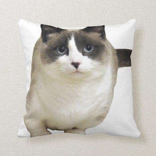 mirada del gato adelante al amor cojin