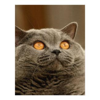 mirada del gato en el estimado amor suavemente membrete a diseño