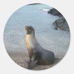 mirada del león marino adelante al amor y a la paz pegatinas redondas