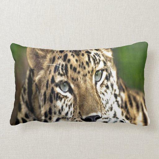 Mirada del leopardo de Amur adelante al amor Almohadas
