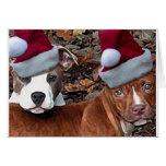 Mirada del navidad de Pitbulls en tarjetas de feli