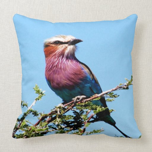 Mirada del pájaro adelante para amar alegría de la almohadas
